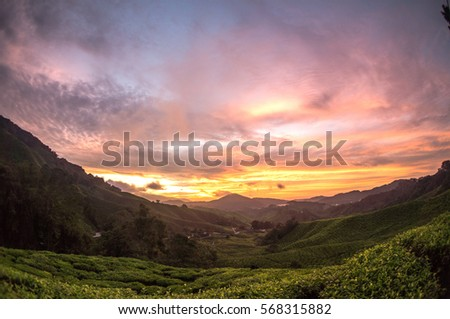 Sunrise over Sungai Palas tea plantation in Cameron Highlands, Pahang, Malaysia #568315882