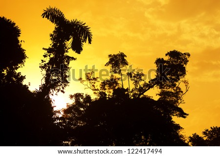 Sunrise over the Amazonian jungle