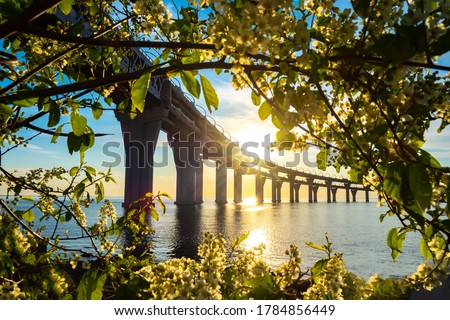 Sunrise over the bridge. The bridge is surrounded by branches of bird cherry. Beautiful landscape with bird cherry trees. Road bridge over water and bright sun. Highway on the bridge.