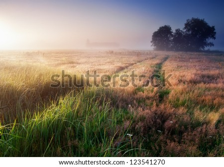 Sunrise over the foggy morning