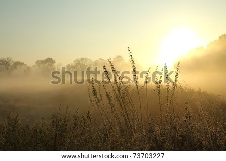 Sunrise over the meadow in a foggy autumn day.