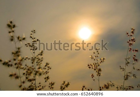 Sunrise over the morning grass silhouettes. Grass in low golden morning light deep warm colors. Can be use for natural background concept. #652640896
