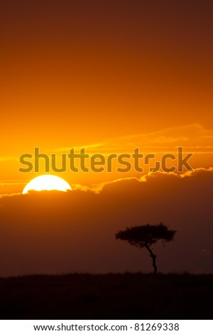 Sunrise over the plains of East Africa, Maasai Mara National Reserve, East Africa