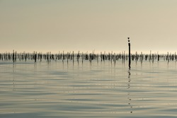 Sunrise over the sea on a foggy morning, Arcachon Bay, zen concept