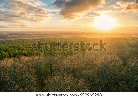 Sunrise over trees #652965298