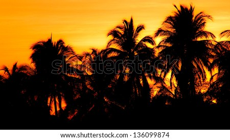 Sunrise Palms Papagayo. Sunrise behind a group of palm trees in the gulf of Papagayo, Costa Rica.
