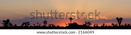 Sunrise Panorama of Joshua Tree National Park in the Mojave Desert of Southern California.