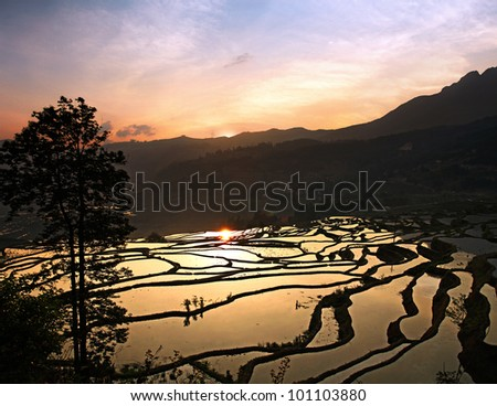 Sunrise Reflected in the Water of the Yuan Yang Rice Terraces, Yunnan province, China