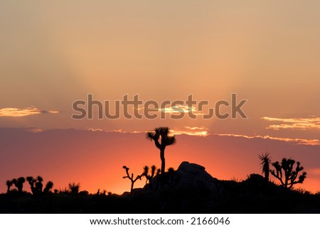 Sunrise silhouette in Joshua Tree National Park, in the Mojave Desert of Southern California.