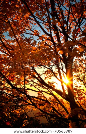 Sunrise through orange autumn tree in fall-Edit - stock photo