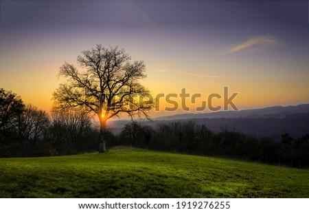 Sunrise tree silhouette. Tree silhouette at sunrise. Sunrise tree. Sunrise tree view