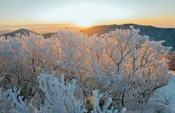 Sunrise view of snow and hoarfrost on trees against mountain ranges and sun at Taebaeksan Mountain near Taebaek-si, Gangwon-do, South Korea