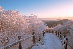 Sunrise view of snow on hiking trail with fence and hoarfrost on trees at Taebaeksan Mountain near Taebaek-si, South Korea