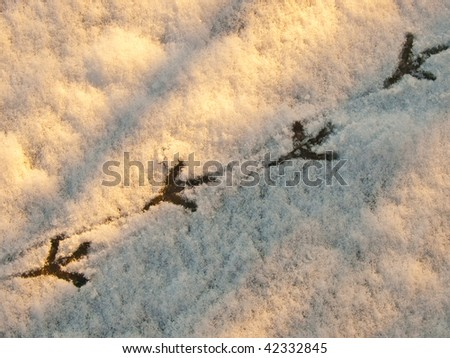 Sunrise warm light and shadows on Pigeon tracks / foot prints in the snow. Winter wildlife background.
