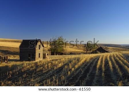 Sunrise Wheat Farm