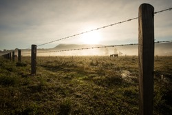 Sunrise Winter morning of a cattle farm landscape with a cow and her calf behind a barbed wire fence and amongst the misty fog