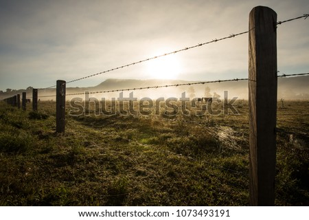 Sunrise Winter morning of a cattle farm landscape with a cow and her calf behind a barbed wire fence and amongst the misty fog  #1073493191