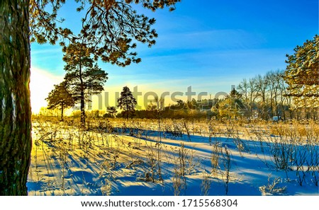 Sunrise winter snow nature scene