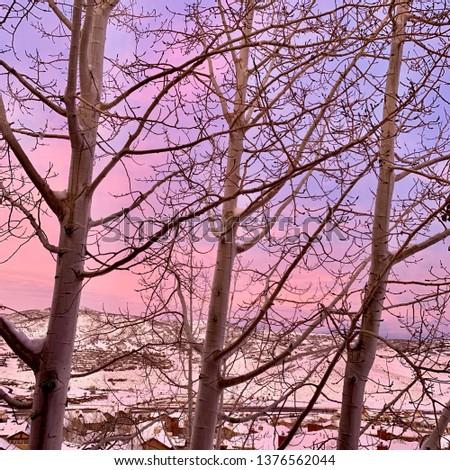 Sunrise with aspens