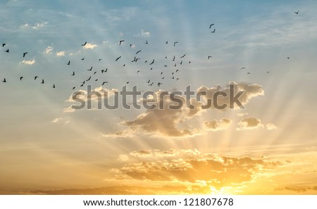 Sunrise with birds flying