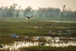 Sunrise with birds in chilika wildlife sanctuary india