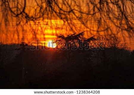 Sunrise with powerlines and trees #1238364208
