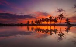 Sunrise with Reflection of tropical tree at Permatang Pauh Pulau Pinang