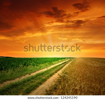 sunset above the field way