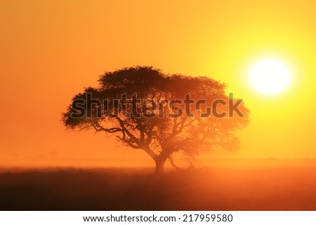 Sunset - African Color Background - Golden Light, Old Tree and Beautiful Nature
