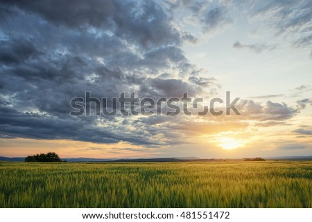Sunset after rain over crop field