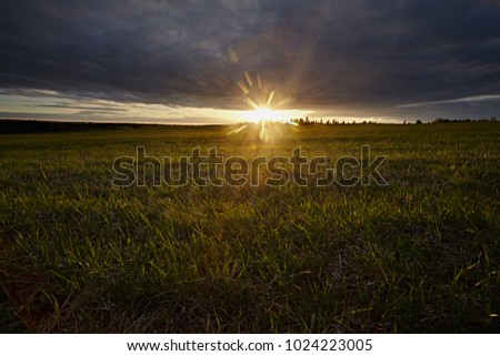 Sunset against the light on the green lawn. Landscape with spring fields and sun. #1024223005