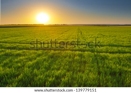 sunset among a green fields