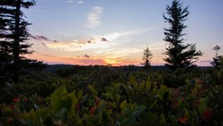 Sunset among lush foliage, Dolly Sods Wilderness, West Virginia