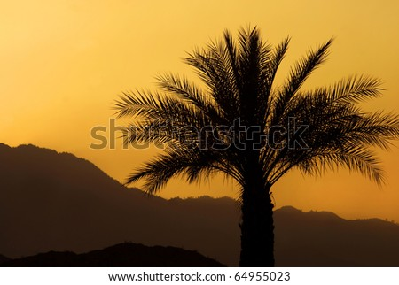Sunset and a palm tree, Palm Springs, California.