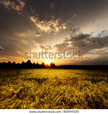 sunset and agricultural field #80894500