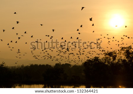 sunset and birds in the sky - stock photo