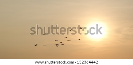 sunset and birds in the sky #132364442