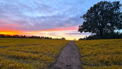 Sunset and clouds over an English field with a footpath and oak tree.