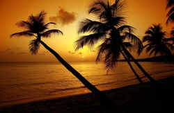 Sunset and coconut palms on The saline beach in Martinique .