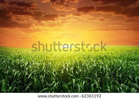Sunset and field with green grass.