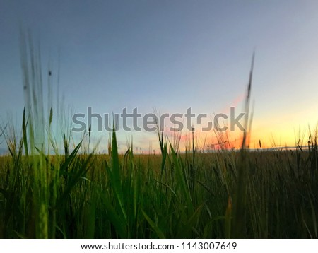 sunset and grass #1143007649