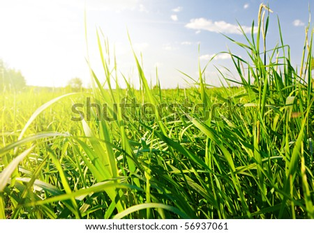sunset and grass