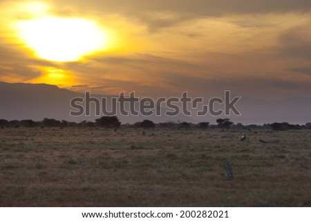 Sunset and landscape in Tsavo East National Park in Kenya with a safari car passing.