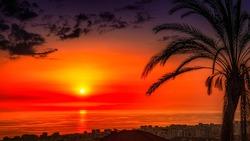 sunset and palm - alanya city - turkey