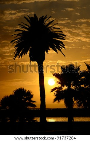 Sunset and palm trees at Newport Beach in the southwest part of Los Angeles CA