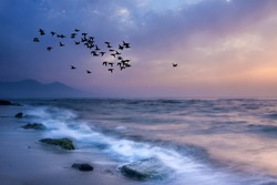 Sunset and sea. Flock of birds flying. Blue purple nature background.