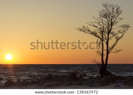 Sunset and tree on the beach