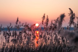 Sunset at a lake with reed in winter. Frozen water and cold mood. Romantic evening.