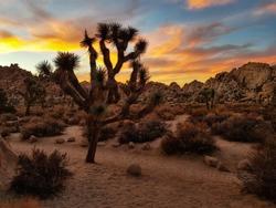 Sunset at Joshua Tree National Park, California (USA)