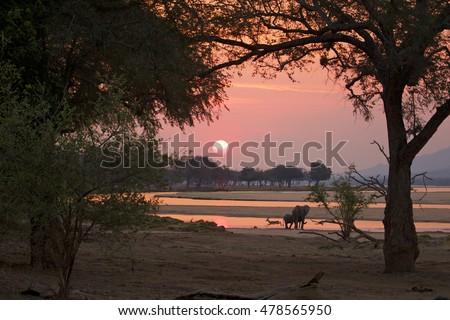 stock photo sunset at mana pools national park zimbabwe 478565950 - Каталог — Фотообои «Животные»